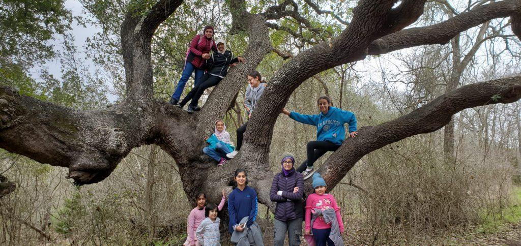 tree-climbing-2-9-20